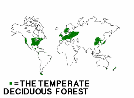 Temperate deciduous forest lol biomes gumiabroncs Gallery